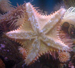 Starfish at the New England Aquarium