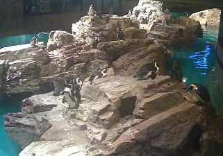 New England Aquarium Penguins